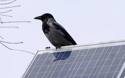 Energía Solar: Generala en tu propia casa